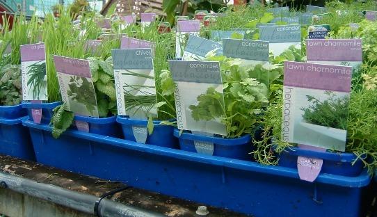 Herbaceous_Pots